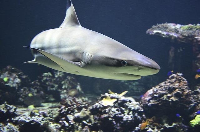 Hai - ein Raubfisch
