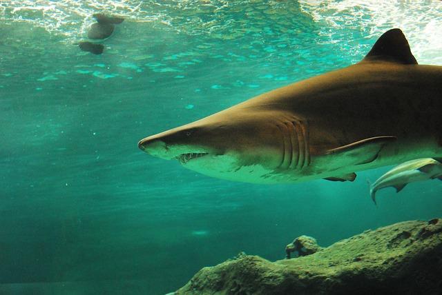 die gefährlichsten Raubfische der Welt